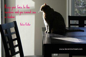 Cat in the sunshine