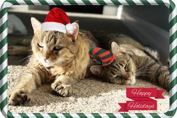 Merry Christmas from cats