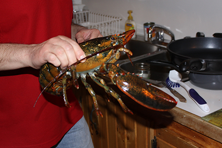 Lobster (450pi)