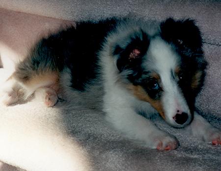 Puppy Deacon - his eye was half blue, have brown.