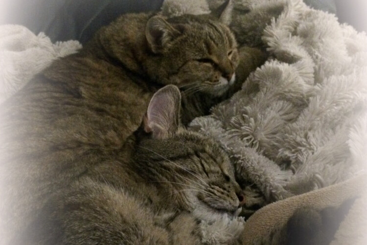 Cats taking a nap together