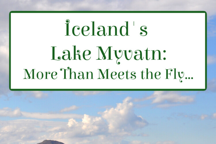 Lake Myvatn, in Iceland's boreal forest, is famous for flies! In summer, up to 50,000 fly larvae swarm in every square metre of lake bed.