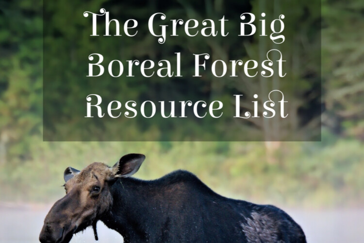 Moose are an iconic species of the boreal forest. This list of resources will support learning in the classroom and at home.