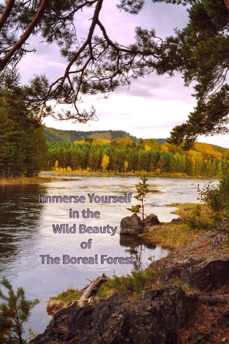 In addition to providing habitat for plants and animals, the boreal forest supports people's cultural, spiritual, and aesthetic needs.