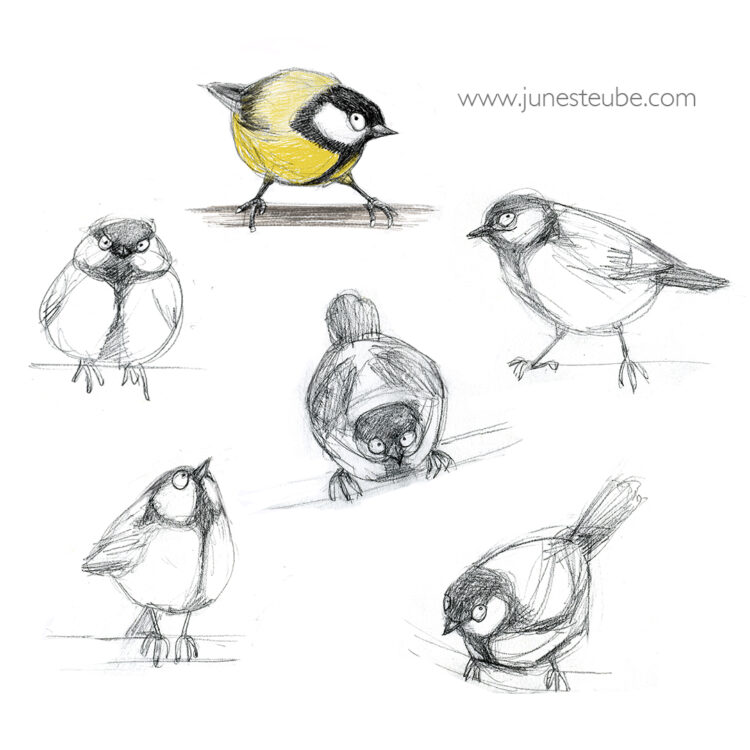 Great Tit sketches by June Steube