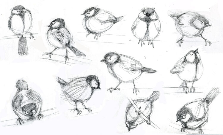 Character studies of a great tit by artist June Steube