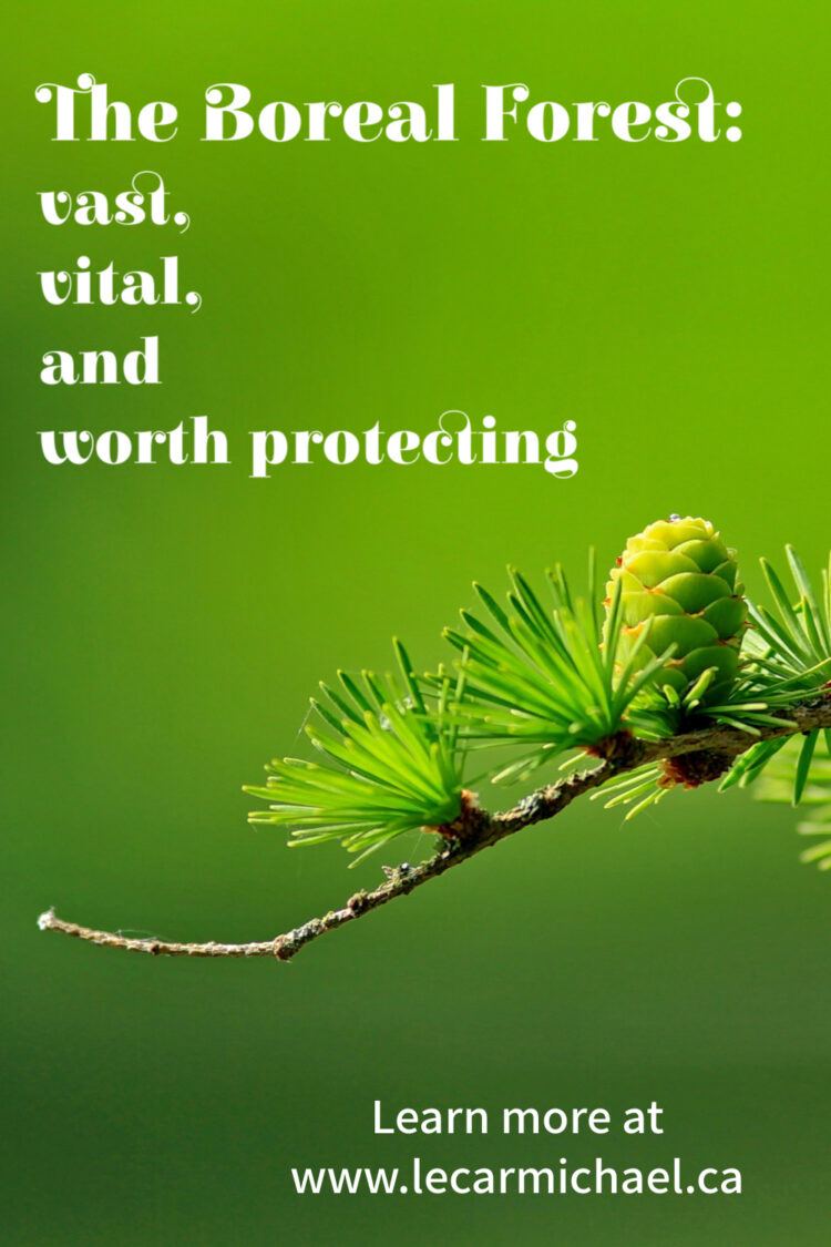The boreal forest is a vast and vital wilderness that is worth protecting.