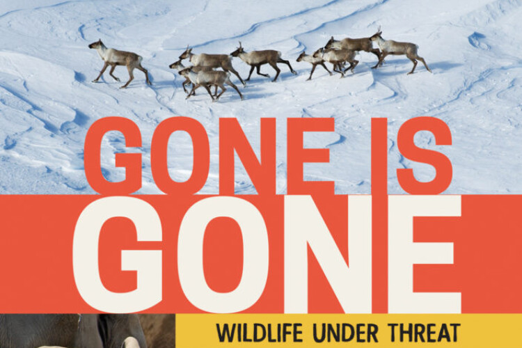 Gone is Gone by Isabelle Groc